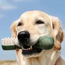 Dental Care - Barlow Trail Veterinary Clinic
