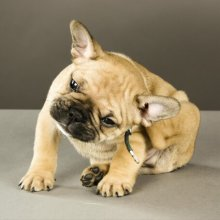 Parasites - Barlow Trail Veterinary Clinic