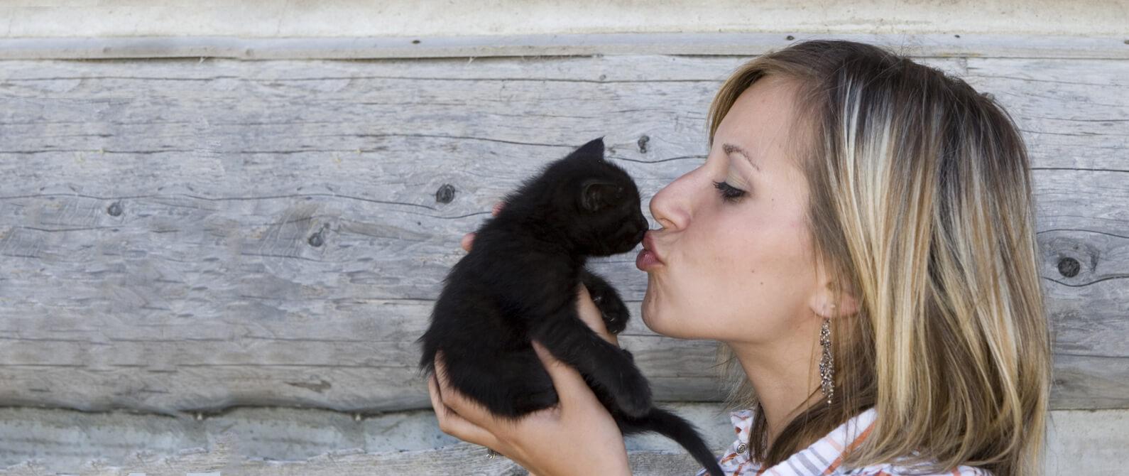 Barlow Trail Cat - Barlow Trail Veterinary Clinic