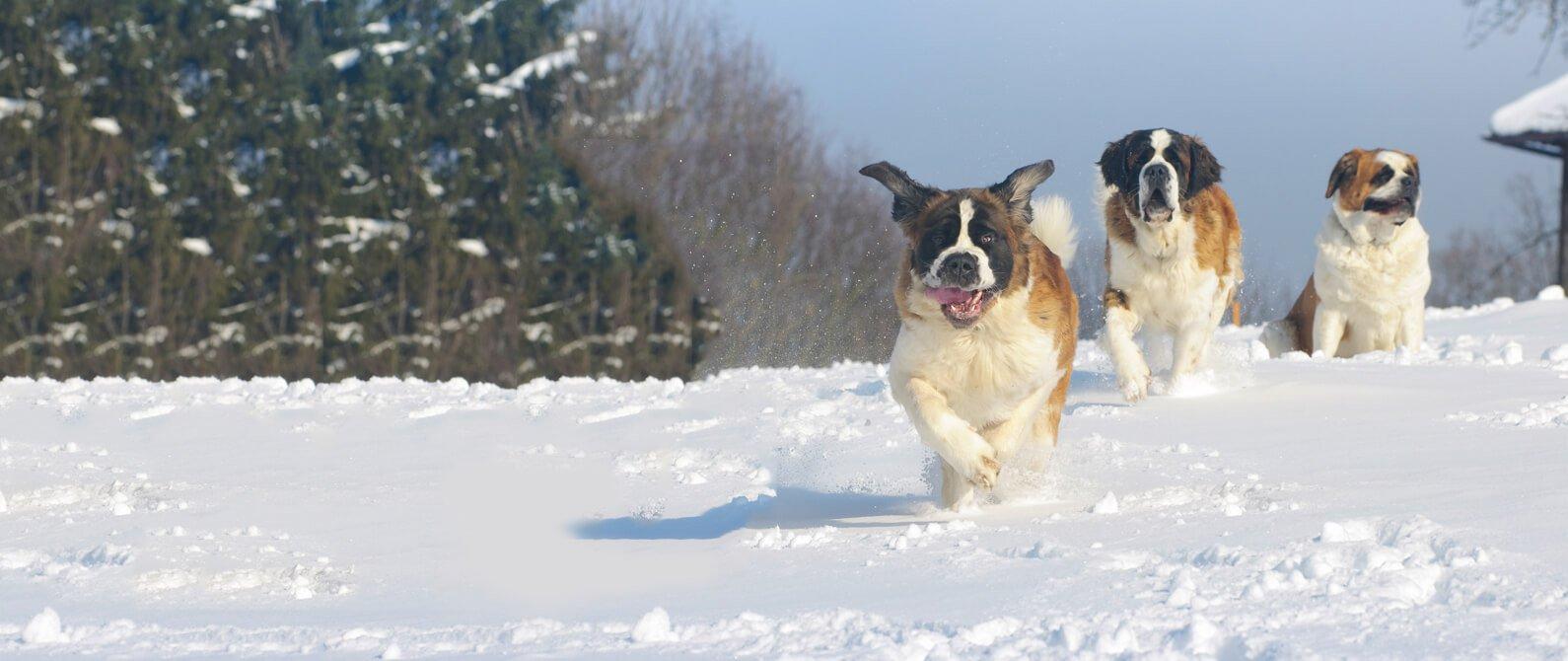 Barlow Trail Dogs - Barlow Trail Veterinary Clinic