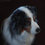 Bronco - Barlow Trail Veterinary Clinic