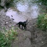 Dog near water