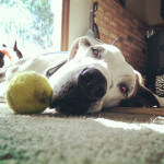 Dog with ball laying down